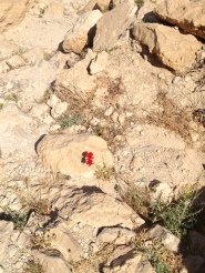 On the climb up Qumran - I was amazed how these flowers persevered amidst the rocks and desert.